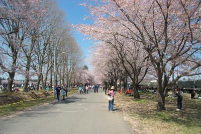 熊谷基地桜祭り2008 その2