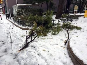 雪で折れてしまった木